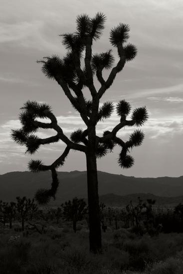 Yucca Brevifolia I-Erin Berzel-Photographic Print