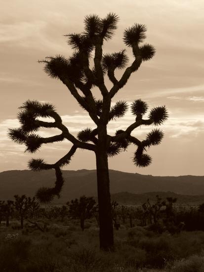 Yucca Brevifolia III-Erin Berzel-Photographic Print