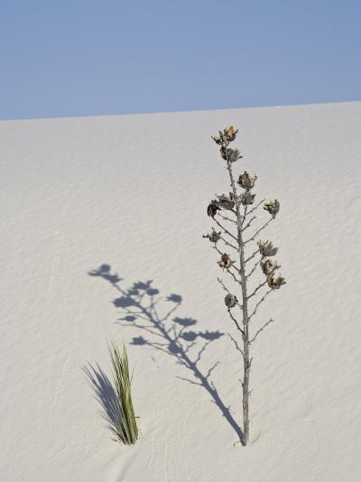 Yucca on Dune, White Sands National Monument, New Mexico, United States of America, North America-James Hager-Photographic Print