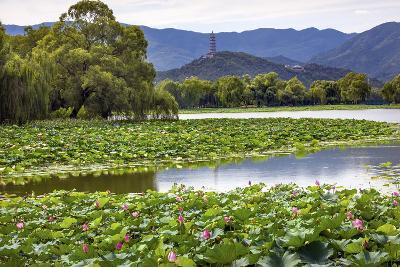 Yue Feng Pagoda Pink Lotus Pads Garden Reflection Summer Palace, Beijing, China-William Perry-Photographic Print