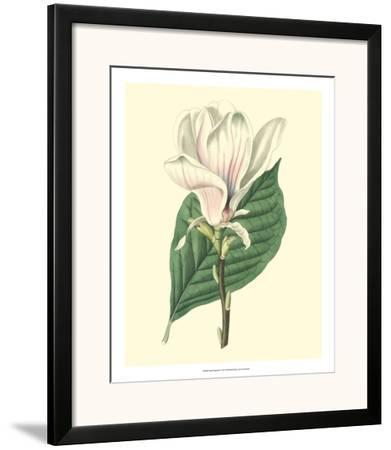 Yulan Magnolia--Framed Art Print