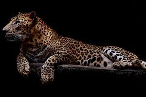 Jaguar by yulius handoko