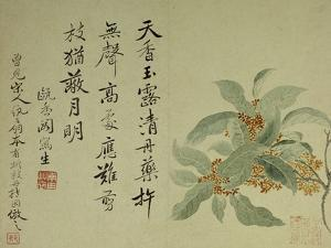 Cassia by Yun Shouping
