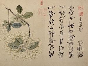 Hydrangeas by Yun Shouping