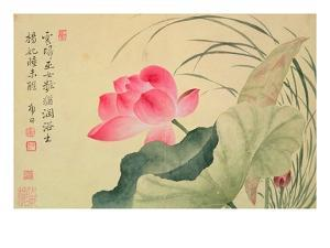 Lotus Flower, by Yun Shou-P'Ing (1633-90), from an 'Album of Flowers', (W/C on Silk Backed Paper) by Yun Shouping