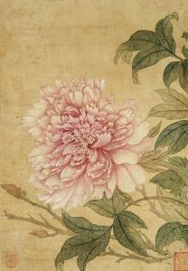 Peony by Yun Shouping