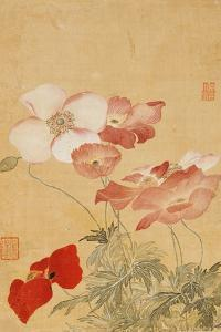 Poppies (Leaf from an Album of Flower Paintings) by Yun Shouping