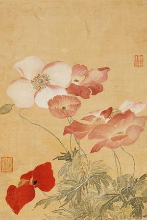 Poppies (Leaf from an Album of Flower Paintings)