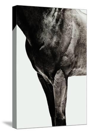 Horse by Yusuke Murata