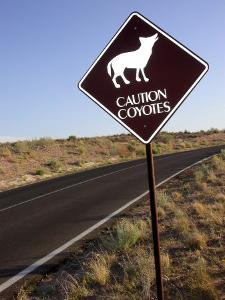 Coyote Crossing Street Sign on Desert Road by Yvette Cardozo