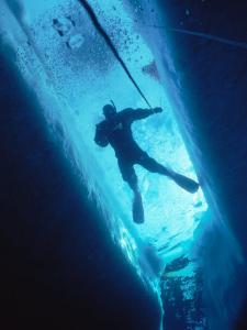 Man Diving in Water Between Ice by Yvette Cardozo