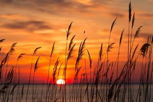Peaceful Chesapeake Bay Sunrise in Calvert County, Maryland. by Yvonne Navalaney