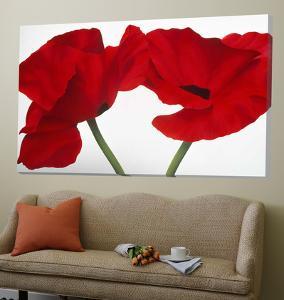 Loving Poppies by Yvonne Poelstra-Holzaus