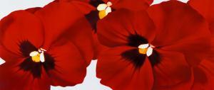Red I by Yvonne Poelstra Holzhaus