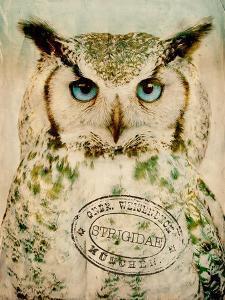 Stoic Owl by Z Studio