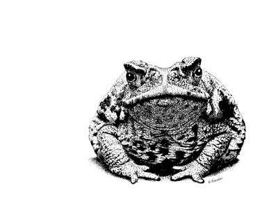 https://imgc.artprintimages.com/img/print/z21-toad_u-l-q1cfkcq0.jpg?p=0