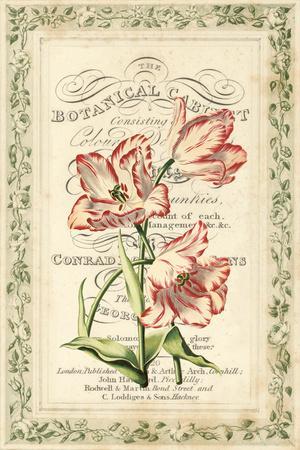 Botanic Cabinet