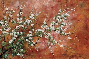 Wild Plum Blossoms by Zachary Alexander