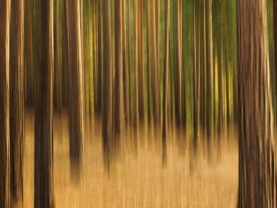 Zadel-David Baker-Photographic Print