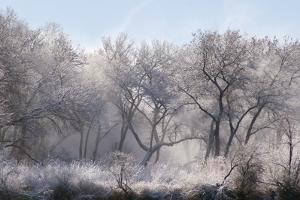 Along the Bosque, New Mexico by Zandria Muench Beraldo