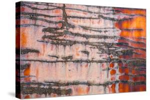 Details of rust and paint on metal. by Zandria Muench Beraldo