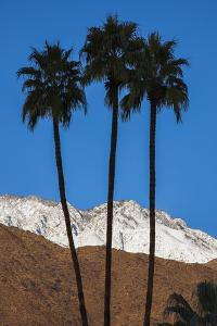 Palm Springs, California by Zandria Muench Beraldo