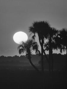 Palm trees and sunrise, Florida by Zandria Muench Beraldo