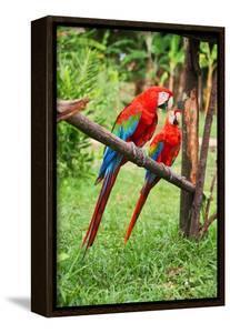 Parrots: Scarlet Macaw (Ara Macao) by zanskar
