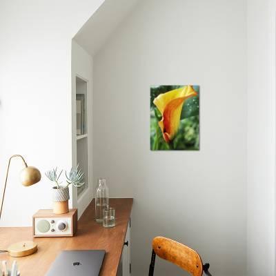 Zantedeschia, Mango (Close-up of Orange Flower) Photographic Print by Chris  Burrows | Art com