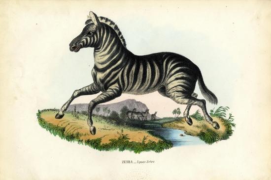 Zebra, 1863-79-Raimundo Petraroja-Giclee Print