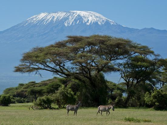 Zebra, Amboseli National Park, With Mount Kilimanjaro in the Background, Kenya, East Africa, Africa-Charles Bowman-Photographic Print