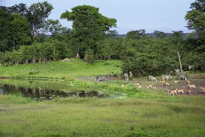 Zebra and Impala at Waterhole, South Luangwa National Park, Zambia, Africa-Janette Hill-Photographic Print