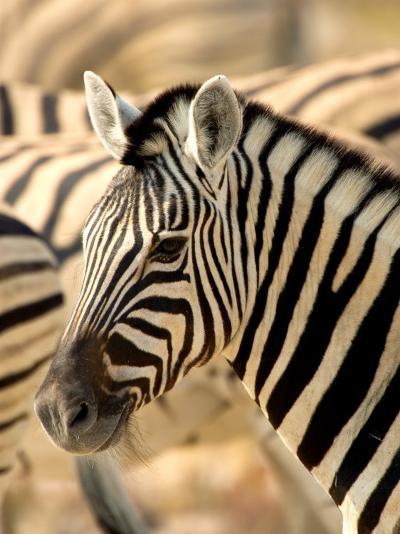 Zebra at Namutoni Resort, Namibia-Joe Restuccia III-Photographic Print