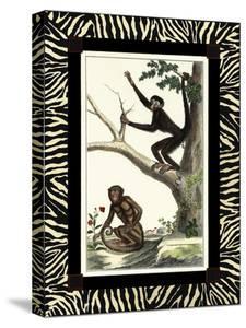 Zebra Border Monkey I