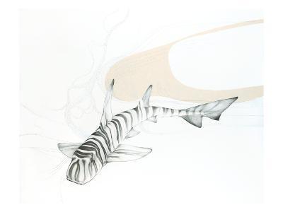 Zebra Bullhead Shark-Jane Kim-Premium Giclee Print
