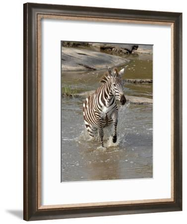 Zebra Crossing the River Full Bleed-Martin Fowkes-Framed Giclee Print