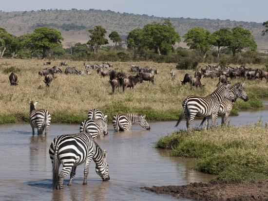 Zebra (Equus Quagga), Masai Mara, Kenya, East Africa, Africa-Sergio Pitamitz-Photographic Print