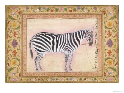 Zebra, from the 'Minto Album', 1621- Mansur-Giclee Print