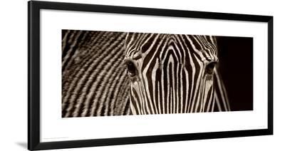 Zebra Grevy-Marina Cano-Framed Giclee Print