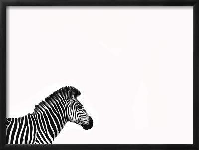 Zebra Isolated-Donvanstaden-Framed Art Print