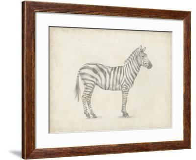 Zebra Sketch-Ethan Harper-Framed Art Print