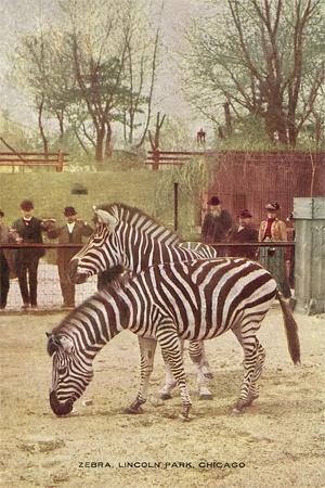 https://imgc.artprintimages.com/img/print/zebras-at-lincoln-park-zoo_u-l-podnzw0.jpg?p=0