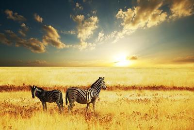 Zebras at Sunset-Galyna Andrushko-Photographic Print