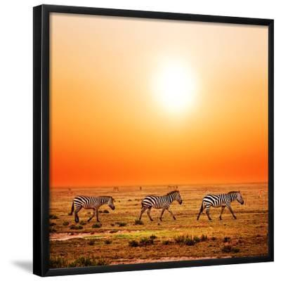Zebras Herd on Savanna at Sunset, Africa. Safari in Serengeti, Tanzania-Michal Bednarek-Framed Art Print