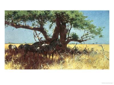 https://imgc.artprintimages.com/img/print/zebras-in-the-steppe_u-l-p22oa20.jpg?p=0