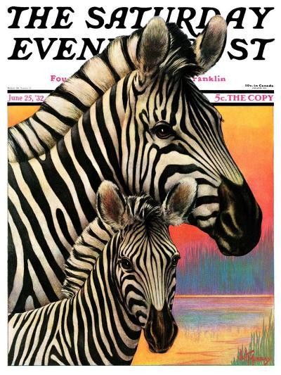"""Zebras,"" Saturday Evening Post Cover, June 25, 1932-Jack Murray-Giclee Print"