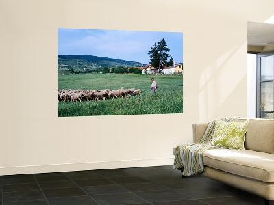 Zemplen Hills Sheep and Shepherd-Wade Eakle-Wall Mural