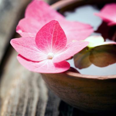 Zen Bowl--Photographic Print