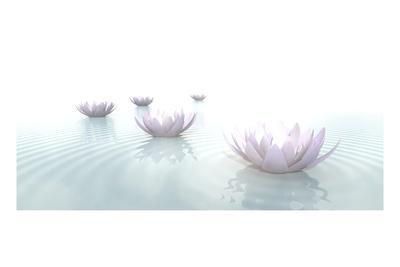 https://imgc.artprintimages.com/img/print/zen-lotus-flowers-in-water-with-ripples-on-blurred-background_u-l-q1gx4r60.jpg?p=0