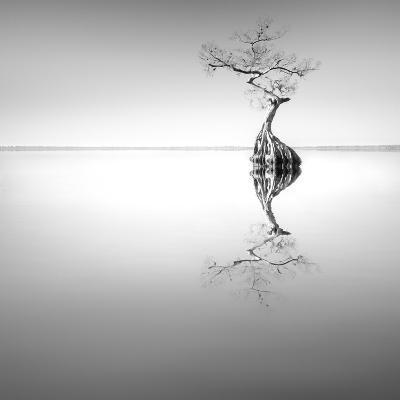 Zen Tree-Moises Levy-Photographic Print